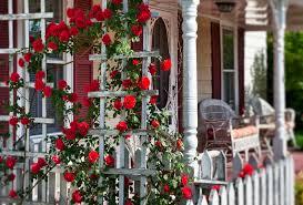 garden design ideas with climbing roses