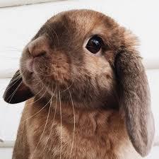 rabbit bunny bunny rabbit i why they named me chocolate adorable