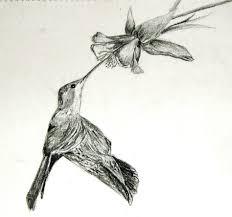 dreams u0026 imaginations sketches series 17 black chinned
