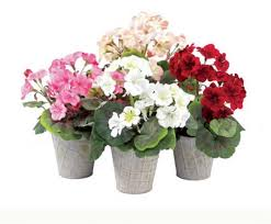potted flowers attractive potted flowers design for home decoration by