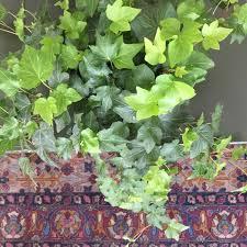 beautiful plants low maintenance indoor plants u2013 aloe u0026 aster