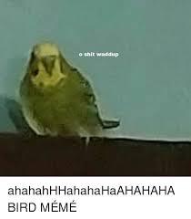 Meme Bird - o shit waddup ahahahhhahahahaahahaha bird m繪m繪 dank meme on me me