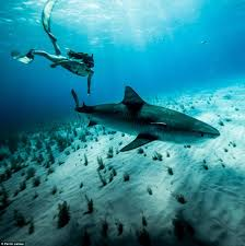 meet nsw shark madison stewart who swims with sharks daily