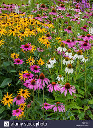southwest harbor maine flowering gardens and pathways in the