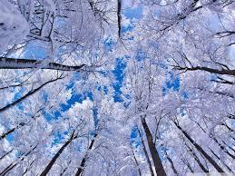 looking up through trees winter 4k hd desktop wallpaper for 4k