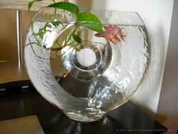 Beta Fish In Vase Home Green Home