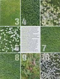 No Grass Backyard Ideas Goodbye Grass 7 Inspiring Ideas For A