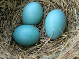 robin egg blue color your world robin egg blue a momma s view