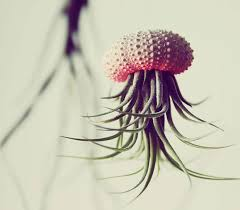 Design For Indoor Flowering Plants Ideas Creative Idea Diy Small Shell Hanging Air Plant Design