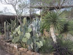 best cactus garden designs home design wonderfull creative under