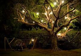outdoor tree lights fk digitalrecords