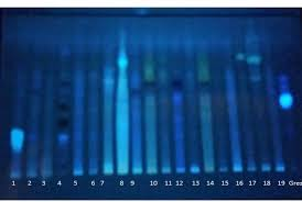 long wave uv light fig 3 separation of secondary metabolites on tlc plate under