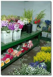 wholesale fresh flowers fresh cut flowers roses carnations daisies s wholesale mobile