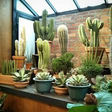 cacti succulents by houseplantjournal cactus pinterest