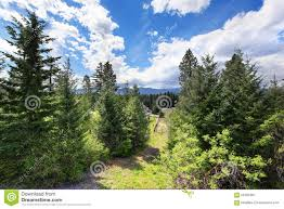 beautiful view of greenery from cabin style home stock photo