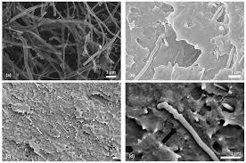 fibers free full text multi scale carbon micro nano fiber