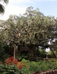 swiss family treehouse adventureland magic kingdom