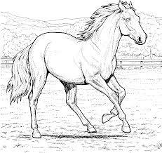 horse coloring page preschool animal coloring pages of