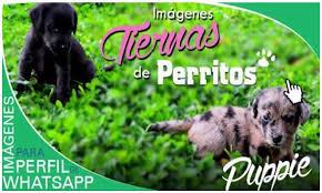 imagenes de animales whatsapp imágenes de perritos para perfil de whatsapp gratis aquí