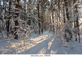 woods snow shadows stock photos woods snow shadows stock images
