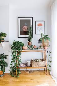 Best Indoor Plants For Oxygen by Best Indoor Plants Indoor Plants At 100 Bromeliad Guzmania