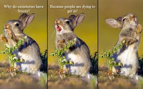 Funny Rabbit Memes - funny bunny animals know your meme