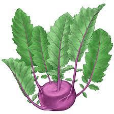 all about growing kohlrabi organic gardening mother earth news