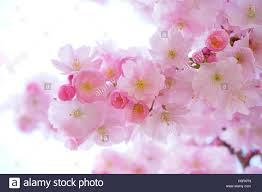 flower delivery near me flowers near me flower delivery stock photo 122661161 alamy