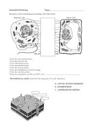 12 best images of animal cell coloring worksheet key animal cell