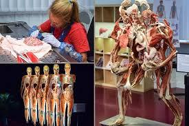 Human Anatomy Careers Contemporary Human Anatomy Of Health Professions