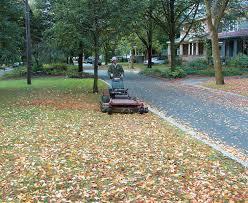 improve your soil by raking less fine gardening