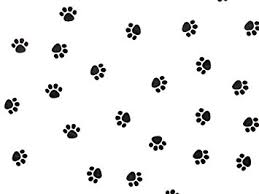 paw print tissue paper paw print tissue paper 20 inch x 30 inch 24 large sheets