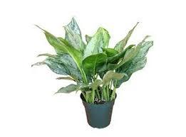 plante d駱olluante chambre les plantes dépolluantes pour la chambre à coucher conseils en