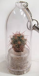 live apple succulent cactus terrarium jewelry plants u2013 boo boo plant