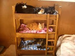 Cat Bunk Bed Another Set Of Cat Bunk Beds I Saw Cool Spoiled