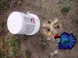 How To Get Rid Of Moles In The Backyard by How To Trap Voles And Moles In Your Yard Youtube