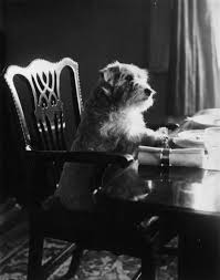Dogs At Dinner Table 96 Best Antique Photography Manimals Images On Pinterest