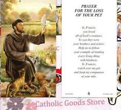 the loss of a pet st francis of assisi prayer for the loss of your pet