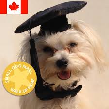 dog graduation cap small dog hat dog grrrrrad graduation cap small dog mall