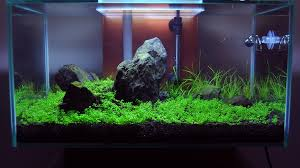 Fluval Edge Aquascape Tanks Meintank