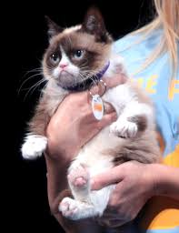 Frown Cat Meme - grumpy cat wikipedia