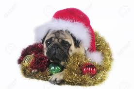 pug dog wearing a santa hat surrounded by christmas ornaments