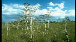 Everglades National Park Map Everglades National Park Foundation