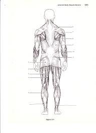 Appendicular Skeleton Worksheet New Page 1