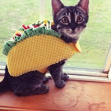 in costumes pet costume cats and kittens in costumes taco costume