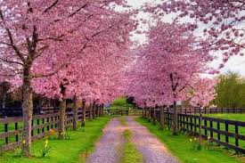 pretty in pink other nature background wallpapers on desktop