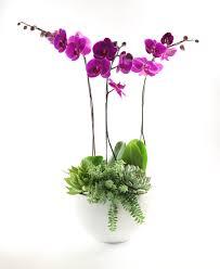 orchid flower arrangements orchid flower arrangement