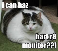 Lolcat Meme - the intellectual property and copyright issues of internet memes