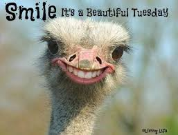 Tuesday Funny Memes - best 25 happy tuesday meme ideas on pinterest happy tuesday