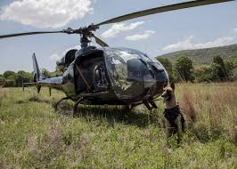 belgian shepherd for sale south africa for south africa u0027s anti poaching dogs rappelling from choppers is